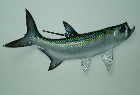 28in Tarpon Wall Decor